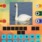 Guess What's The Pic? Birds and Animals Guessing Game Answers for All Levels