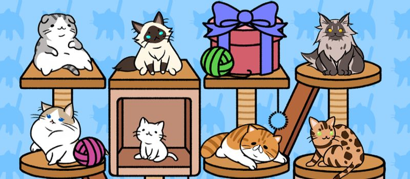 cat condo hints