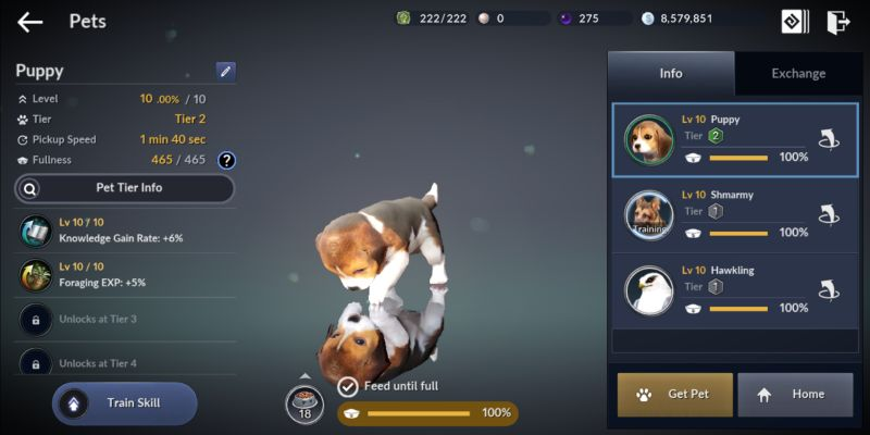 how to acquire pets in black desert mobile