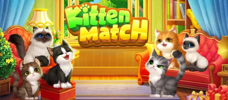 kitten match guide