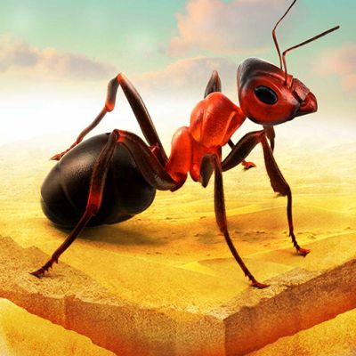little ant colony tips