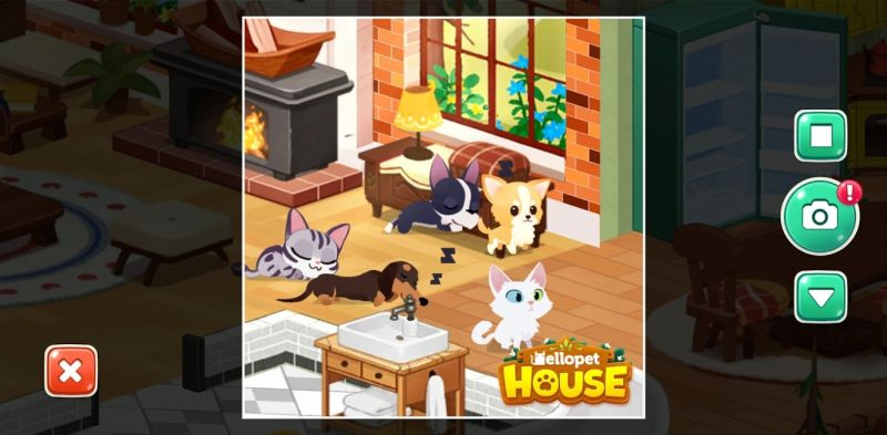 taking photos of pets in hellopet house